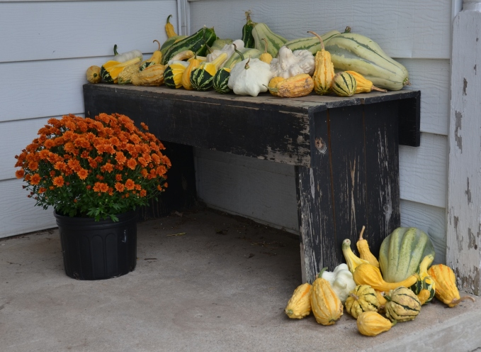 compost-squash-3