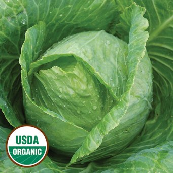0353-early-jersey-wakefield-cabbage-organic