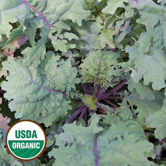0625-red-russian-kale-organic