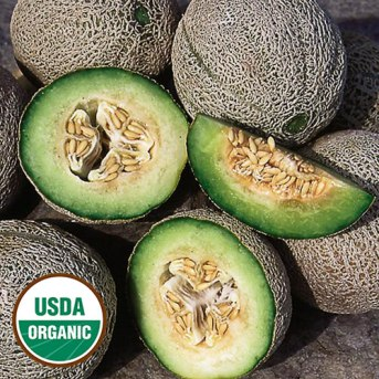 0210-green-nutmeg-melon-organic