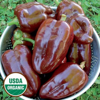 1216-sweet-chocolate-pepper-organic