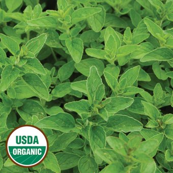 1249-greek-oregano-herb-organic