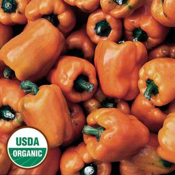 orange-bell-pepper-organic